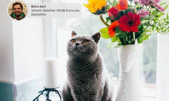 7 Maddede Kedilerde Kısırlaştırma (Doğru Bilinen Yanlışlar)